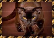 Evcil Kediler Yapboz