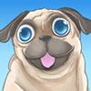 Küçük Köpek Pug